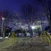 夜桜と遊具
