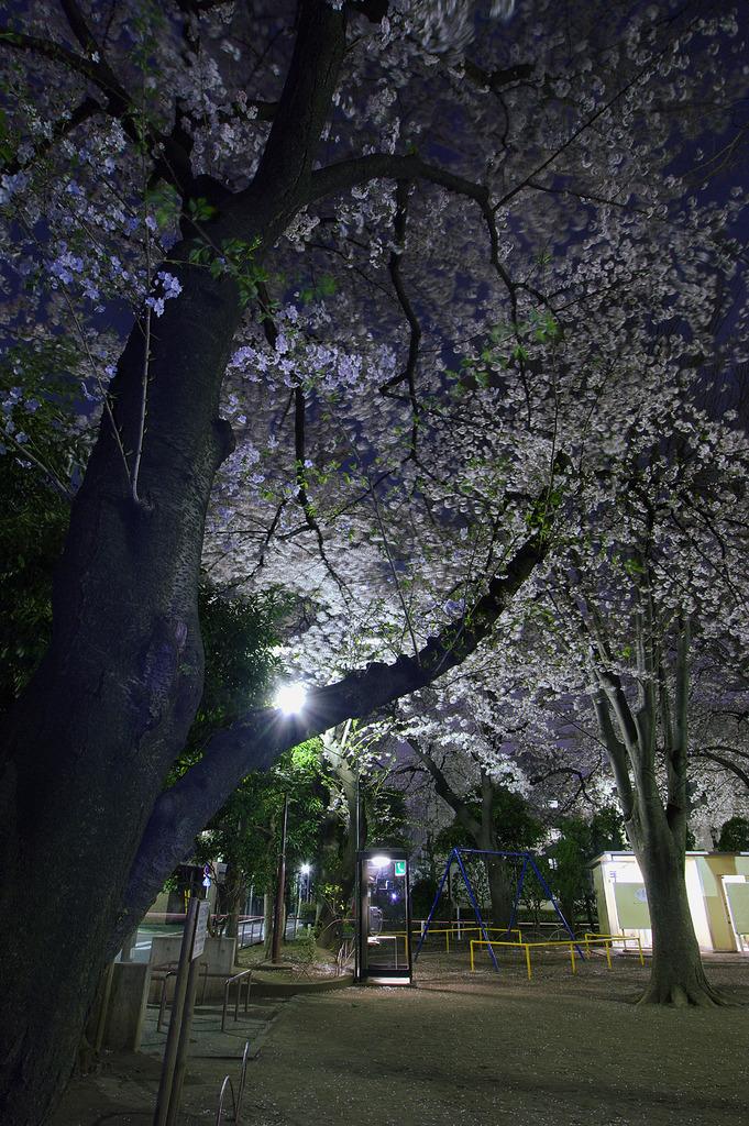 夜桜と公衆電話ボックス