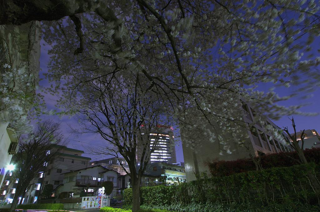 夜桜と練馬区庁舎