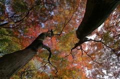 小石川後楽園の紅葉