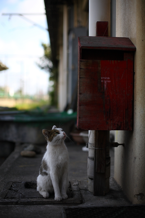 お手紙来ないかにゃ