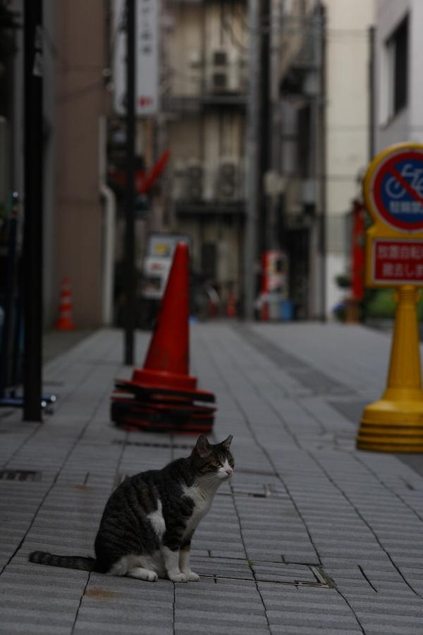 繁華街に生きる猫1