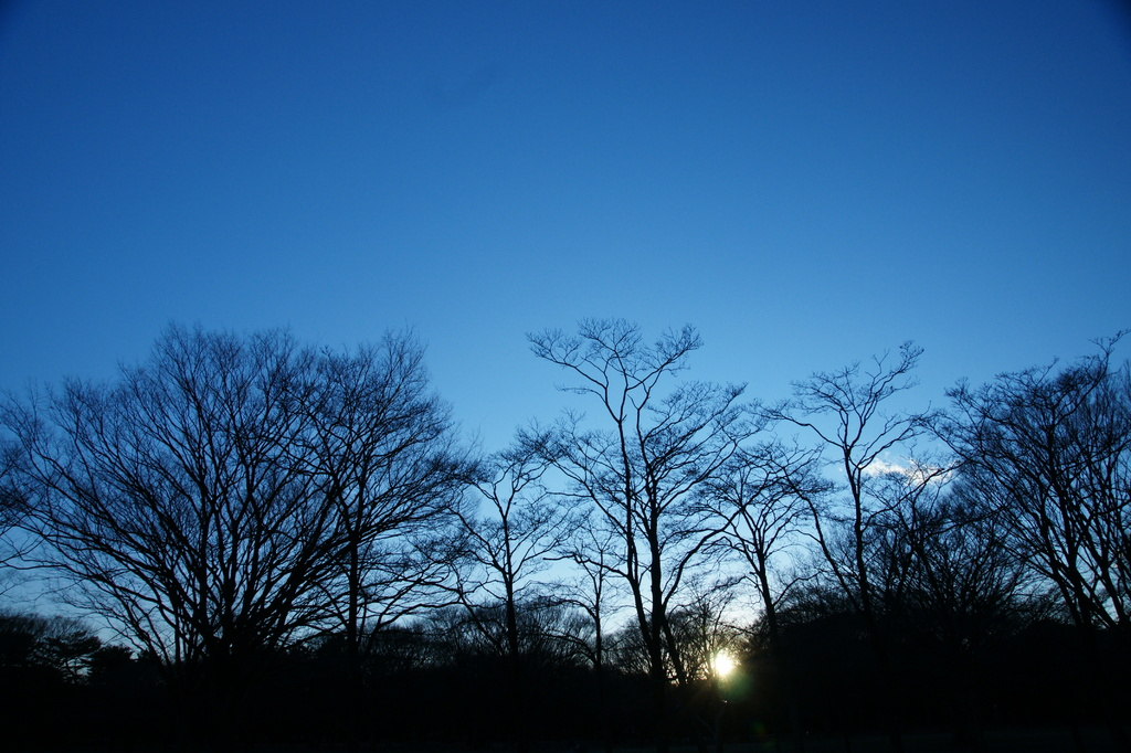 蒼い夜明け