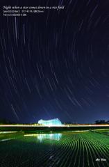 田に星が降る夜