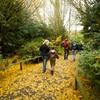 pathway of Autumn