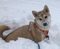 雪大好き。