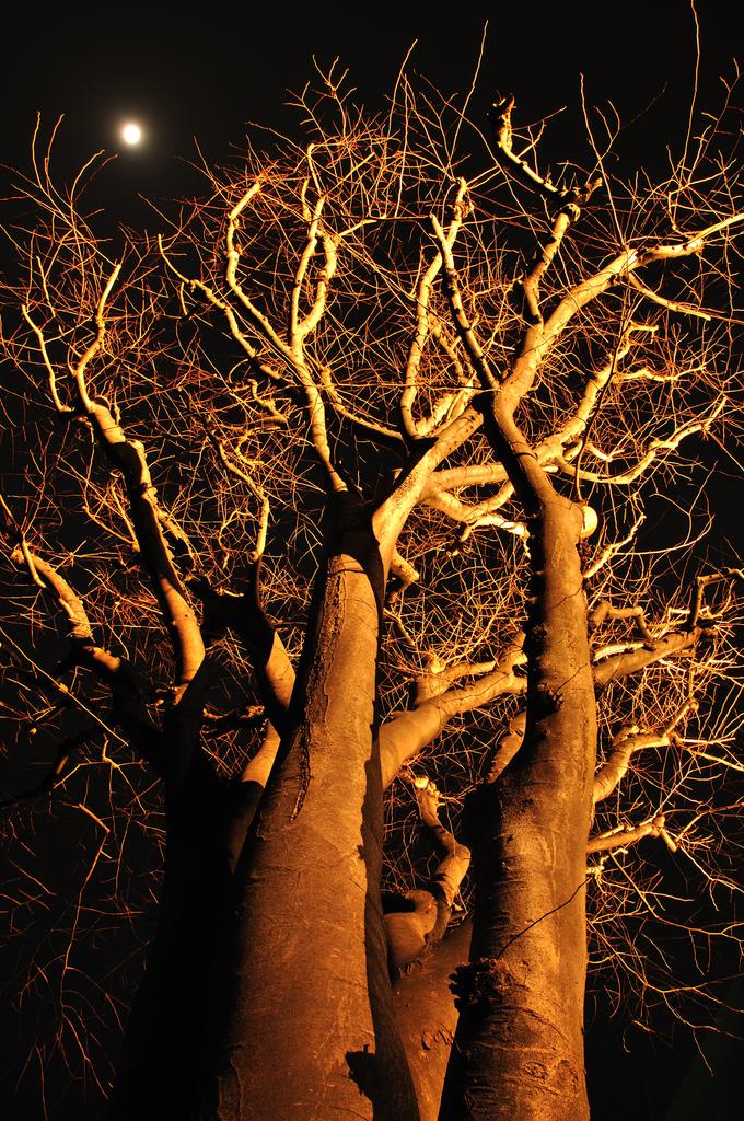 月と冬の樹
