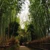 嵯峨路の竹林