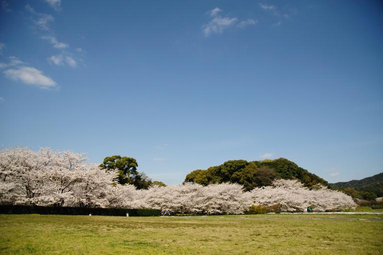 春だけの風景
