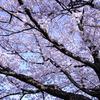 幹から枝から花へ