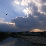 RICOH GR DIGITAL 2で撮影した風景(鳥と空)の写真(画像)
