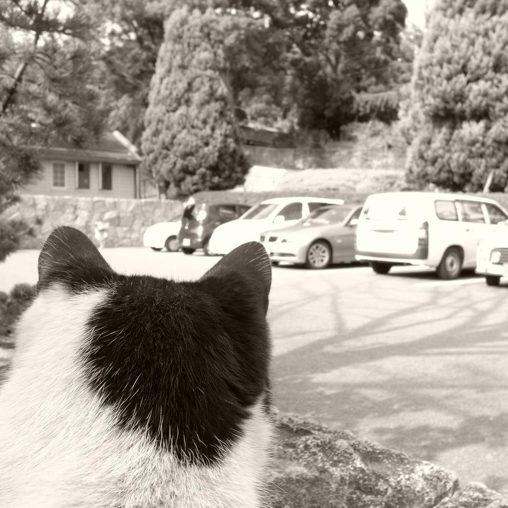 なにを見る猫ぞ