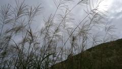 すすき原(奈良県曽爾高原)