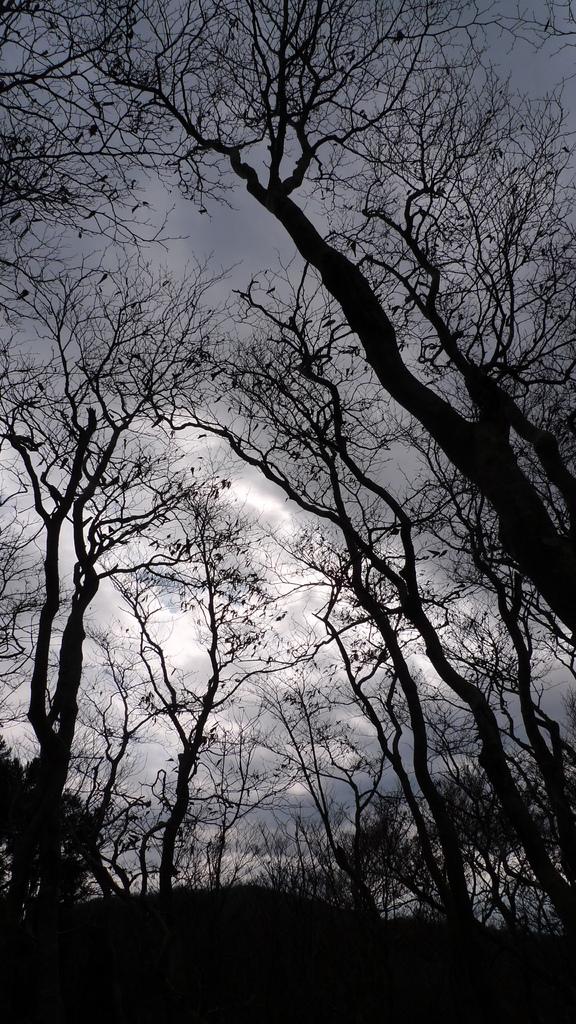 高島トレイル(縱長)