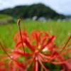 稲渕の棚田(奈良県明日香村)