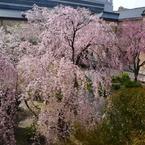 PANASONIC DMC-LX3で撮影した(京都府庁)の写真(画像)