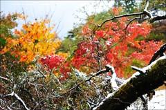 スノー&紅葉