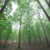 静かな森で...