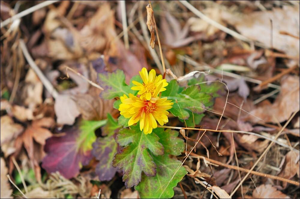 冬の野に咲く花