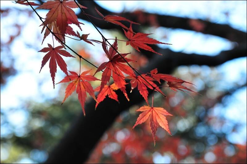 2009外苑の紅葉
