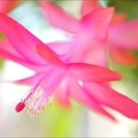 NIKON NIKON D700で撮影した植物(「花」)の写真(画像)