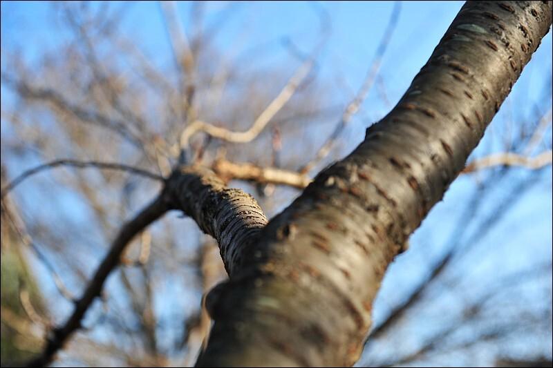 葉の落ちた樹木