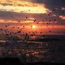 CANON Canon EOS 40Dで撮影した風景(波しぶき)の写真(画像)
