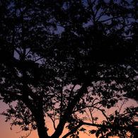 CANON Canon EOS 40Dで撮影した風景(シルエット)の写真(画像)