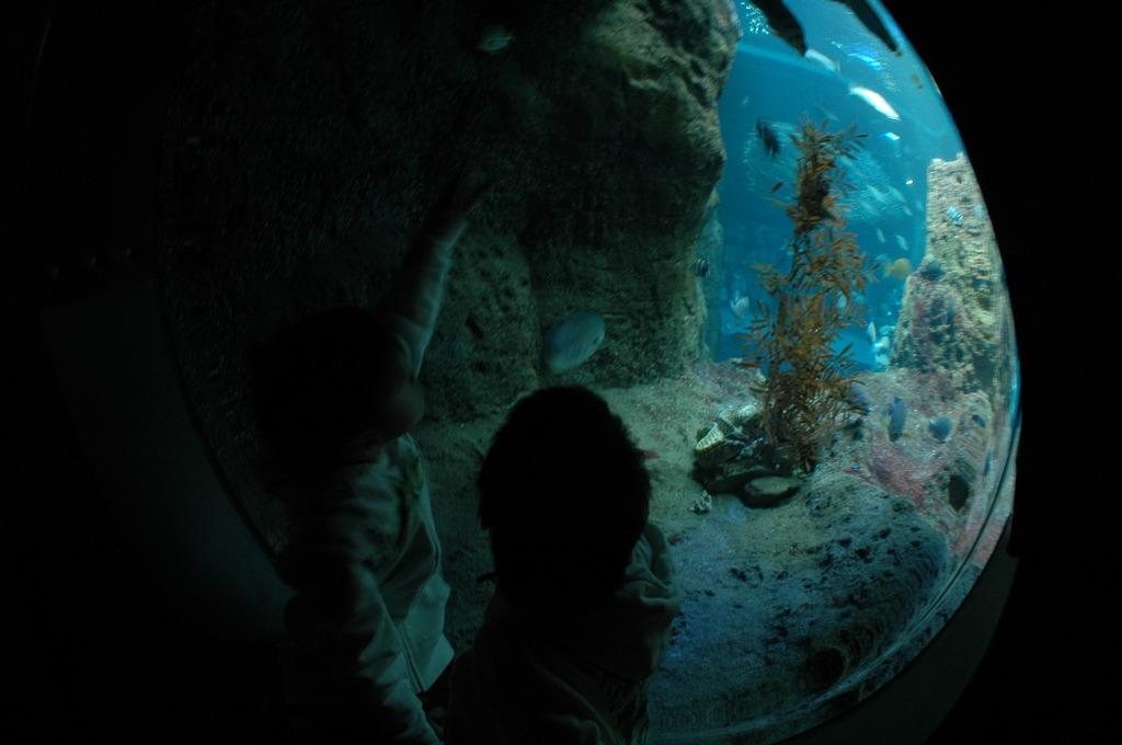 水族館 007