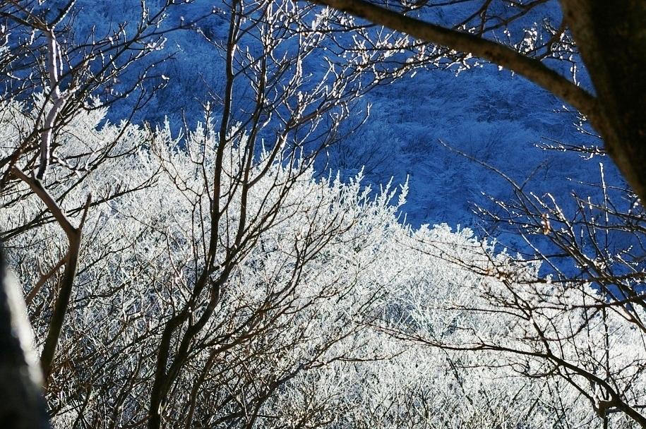 九重の樹氷2