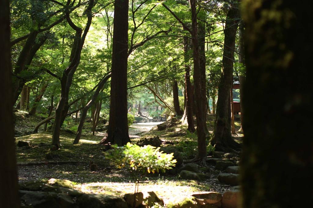 昼下がりの森