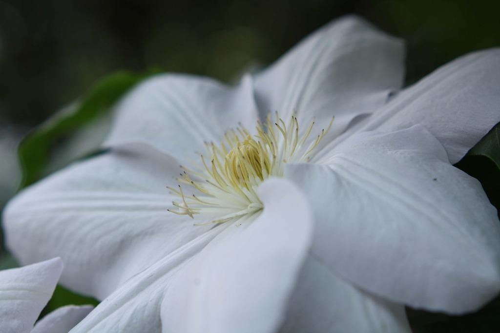 白いテッセン