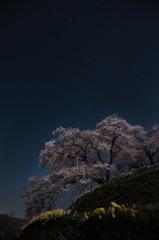 桜かざして星を見上げて