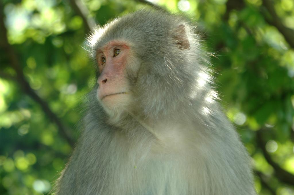 箕面のお猿さん