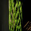 竹のオブジェ