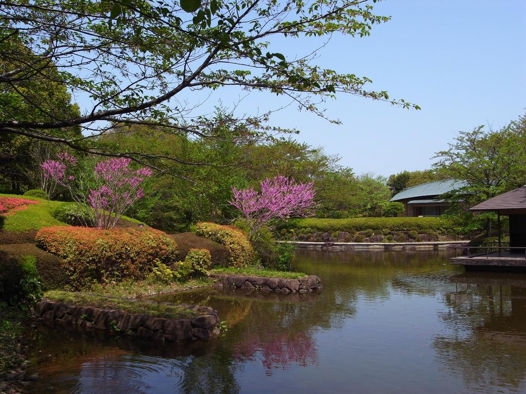 柏の葉公園の新緑7(2009_0419GX200)