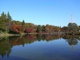 2009_1121GX200昭和記念公園の紅葉03