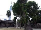牛嶋神社境内から GX200真夏のスカイツリー