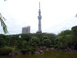 隅田公園から GX200真夏のスカイツリー