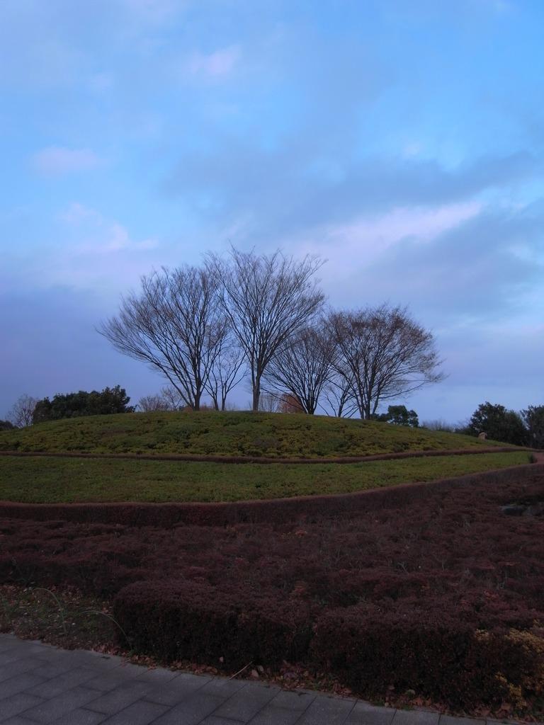 2008_1213GX200冬の木