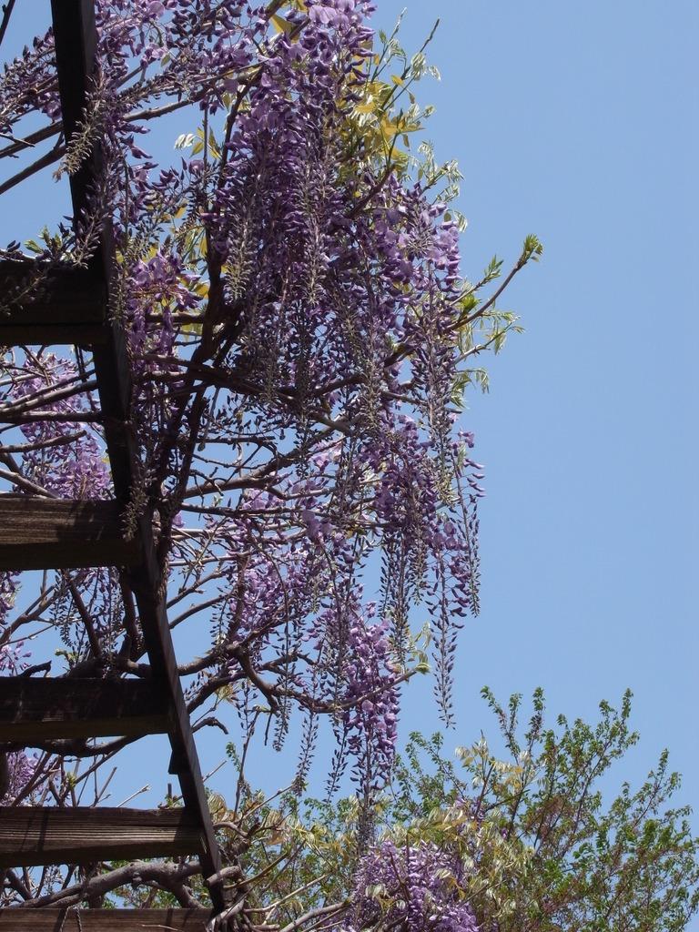 柏の葉公園の新緑4(2009_0419GX200)