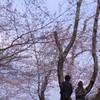 ふたり ~桜の下~