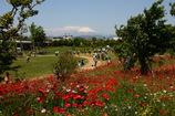 平塚花菜ガーデン