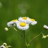 SONY DSLR-A200で撮影した植物(上を向いて)の写真(画像)