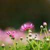波止場の花