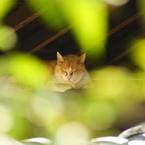 SONY DSLR-A200で撮影した動物(夢の中へ)の写真(画像)