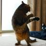 Dancing Cat☆