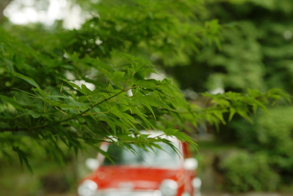 赤い車と緑のもみじ