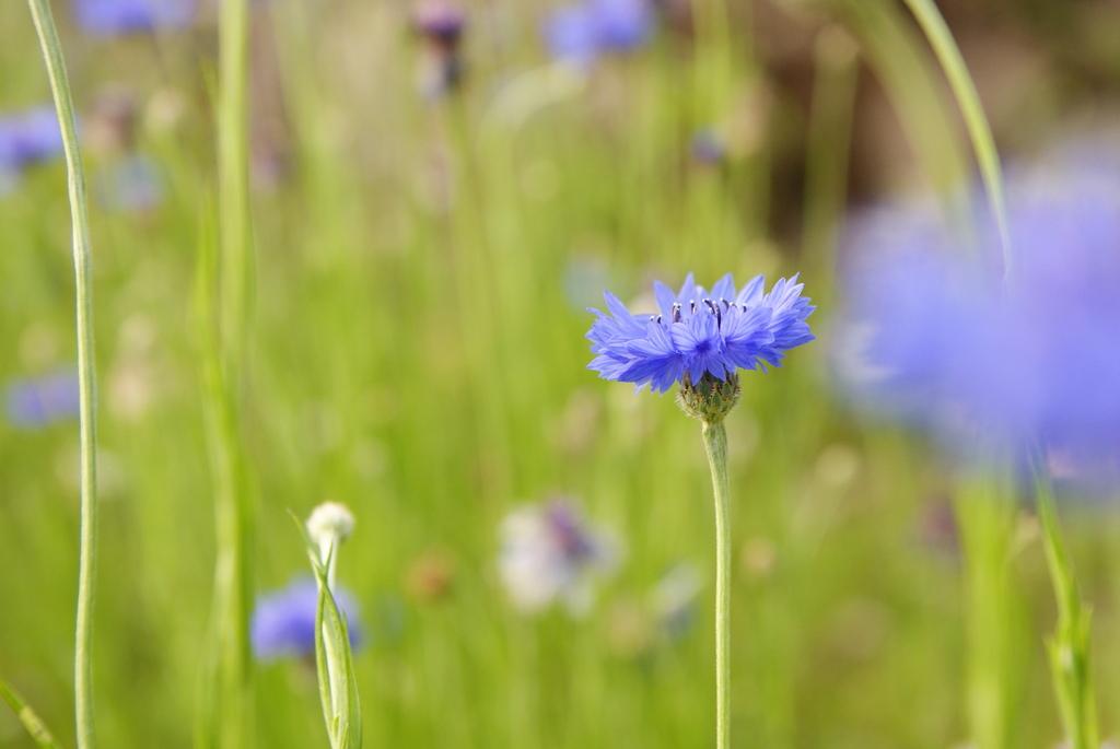 なんか青い花