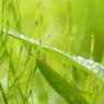 SONY DSLR-A200で撮影した植物(マクロが欲しい!!!)の写真(画像)